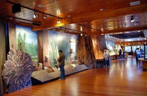 copiii la muzeu roata mare giant forest museum