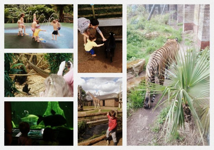 London zoo roata mare 3 Collage