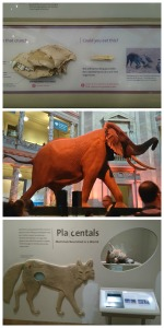 national museum of natural history washington dc Collage