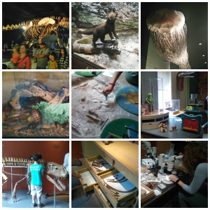 Natural History Museum NYC Roata Mare Collage