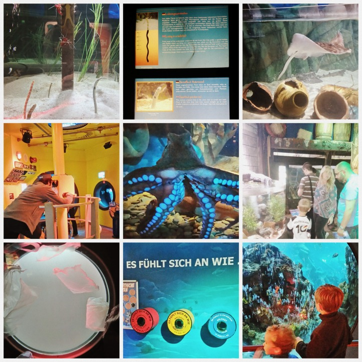 Sea Life Oberhausen  Collage